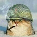 Profilbild von -Tom-